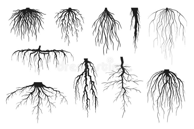 Tree roots silhouettes isolated on white, vector set of taproot and fibrous root systems royalty free stock photography