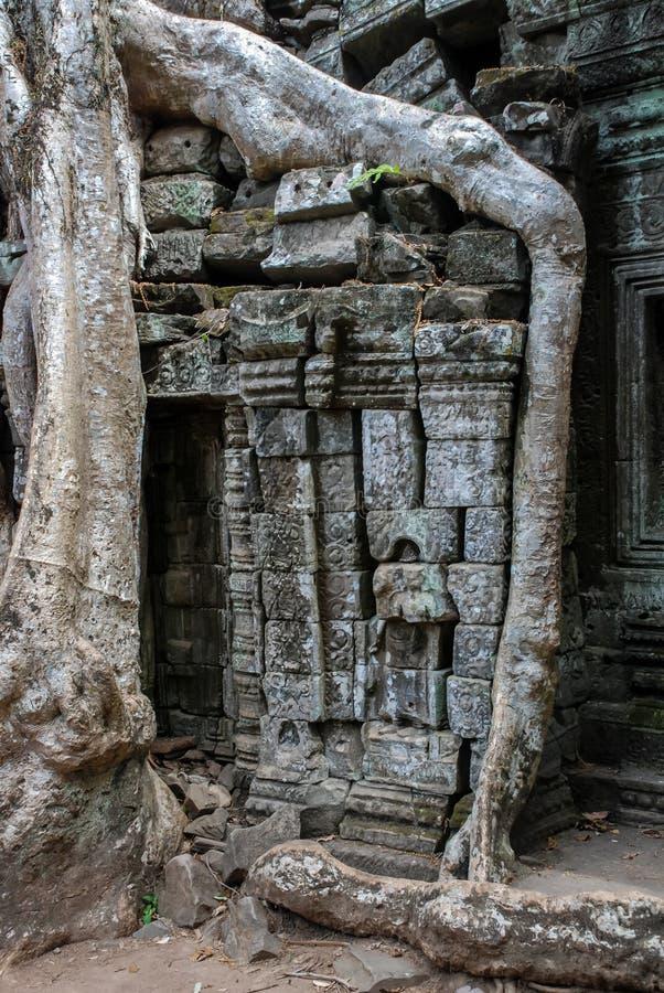 Roots som växer på, fördärvar, templet för Ta Prohm, Angkor Wat arkivbilder