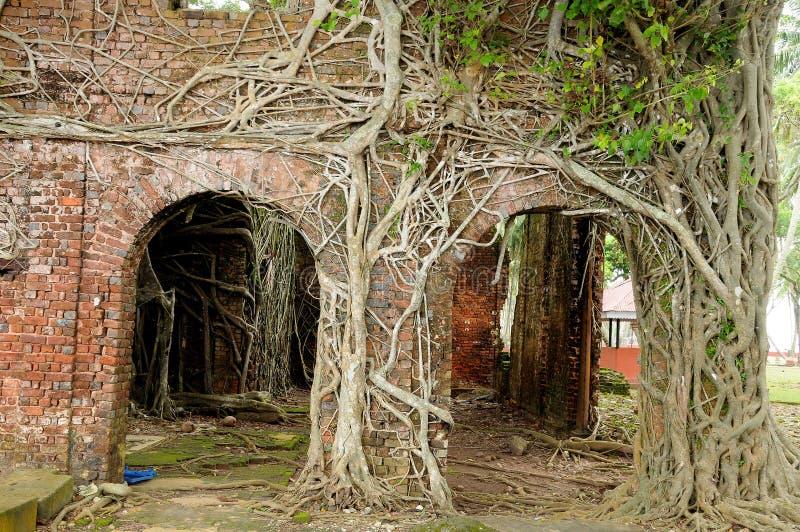 Roots Of Strangler Tree Climb Over Wall Stock Photography