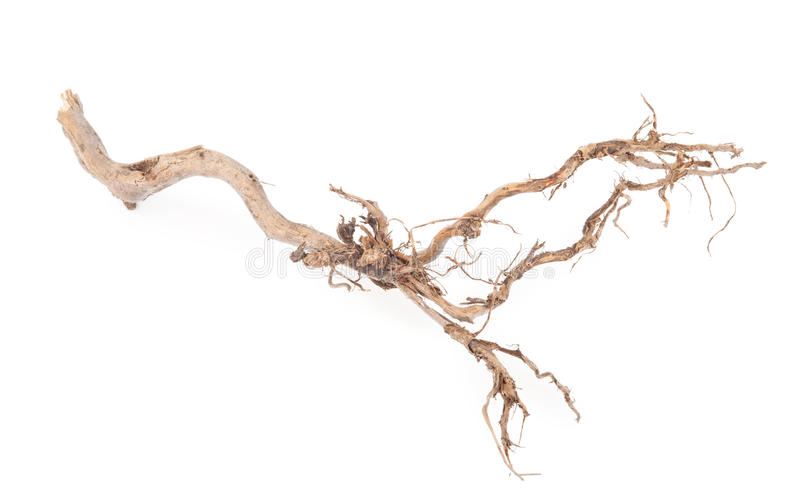 Roots tree. On white background stock photo