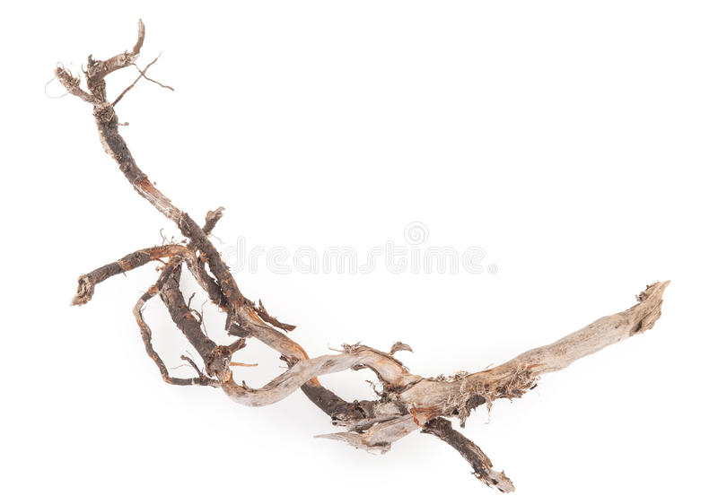 Roots tree. On white background stock images