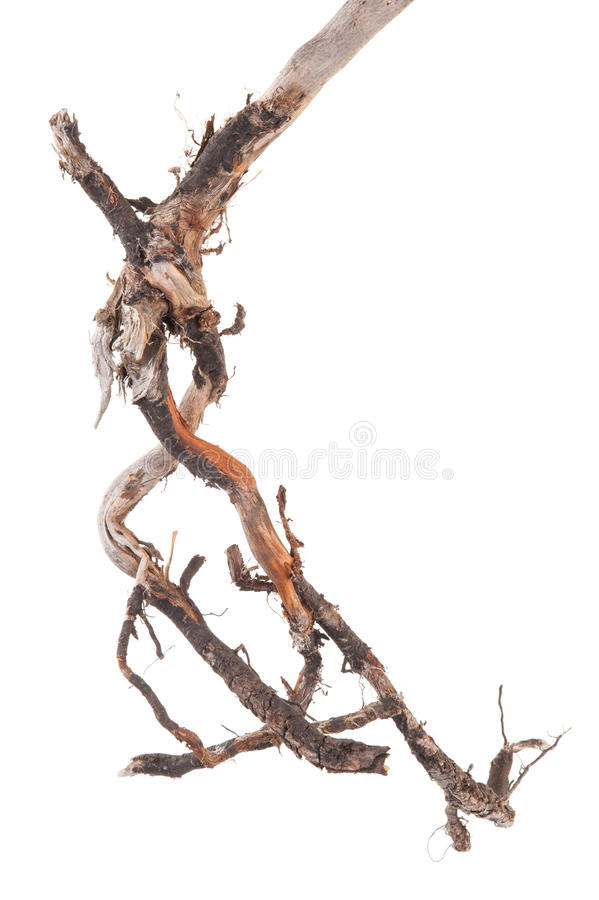 Roots tree. On white background royalty free stock photo