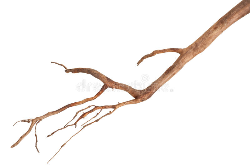 Roots tree. On white background royalty free stock images