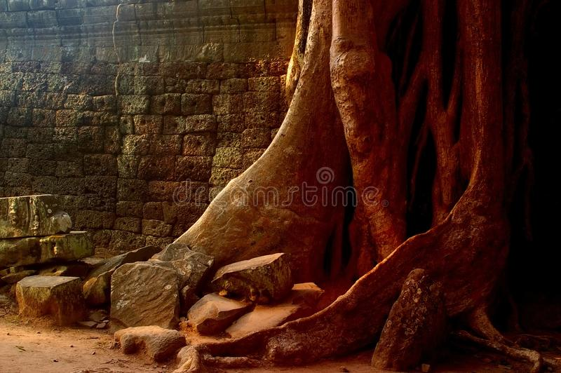 Roots wall stock image