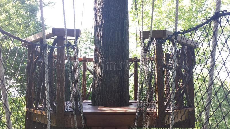 Trees Stand in the Park. A rope bridge leads from the top of a steep ridge to this scenic platform overlooking the valley below stock photos