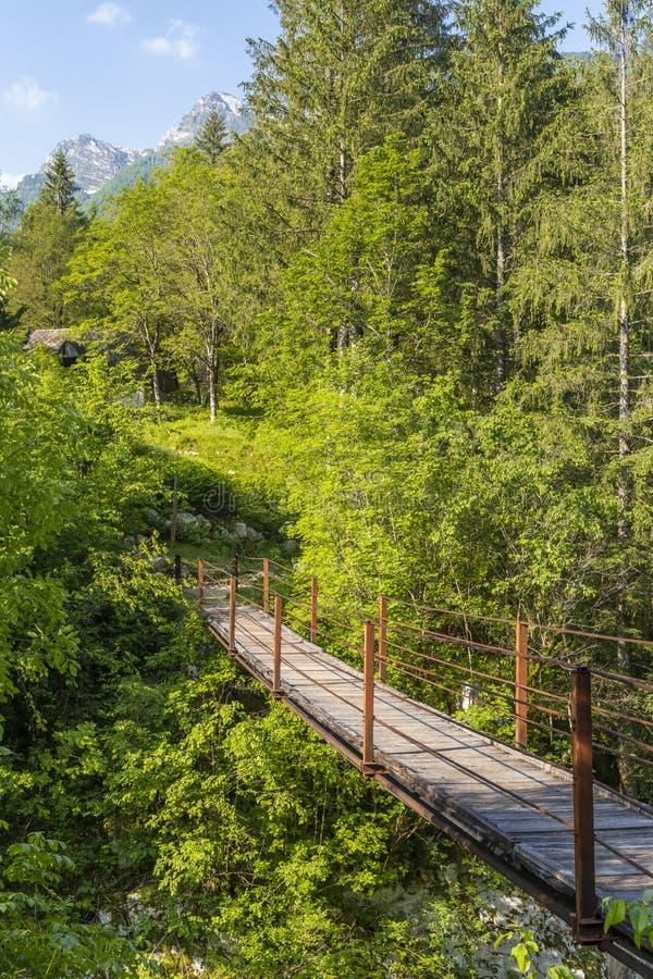 Rope bridge on the river Soca, Triglavski national park, Slovenia. Alpine, alps, background, beautiful, colorful, environment, europe, forest, idyllic, julian stock images