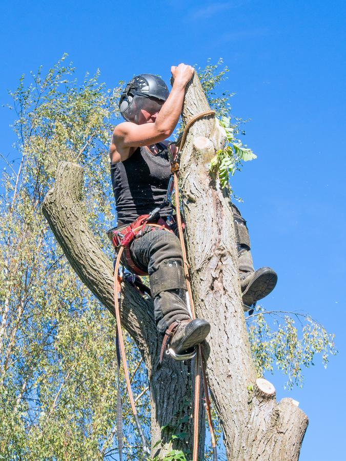 Roped to a tree top. stock photography