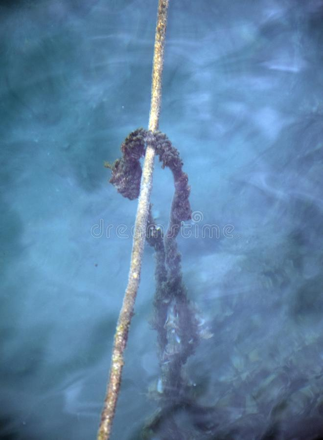 Ropes under the water - Pučišća stock image