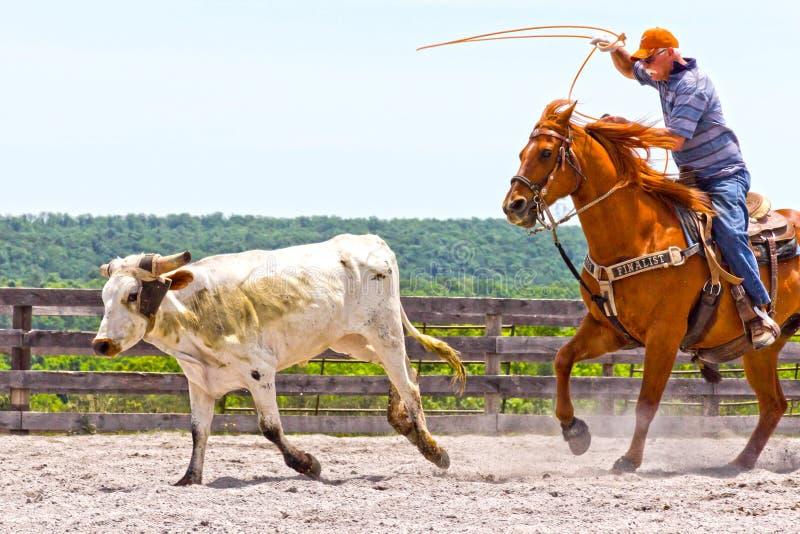 Roping конкуренция стоковое изображение