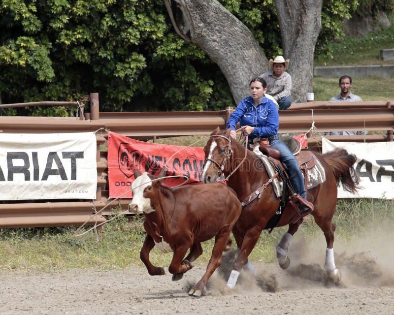 roping foto de stock royalty free