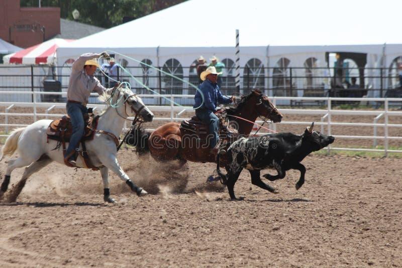 Roping - Cheyenne dni Nadgraniczny rodeo 2013 zdjęcie stock