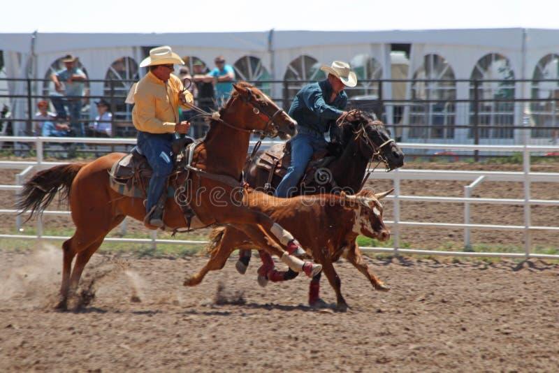 Roping - Cheyenne Frontier Days Rodeo 2013 stock afbeeldingen
