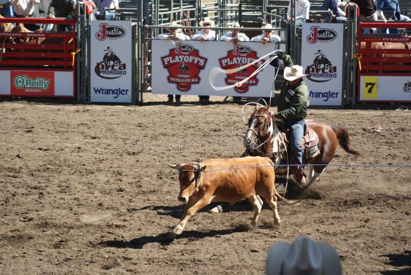 Download Roping Da Equipe Do Cowboy. Foto Editorial - Imagem de roping, chapéu: 26516671