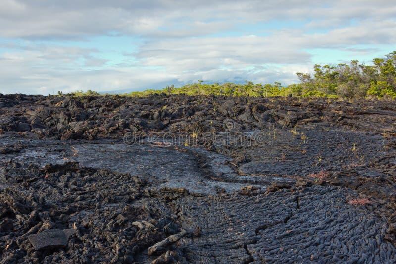 Ropy pahoehoe lava flow on Isabela. Ecuador royalty free stock photos