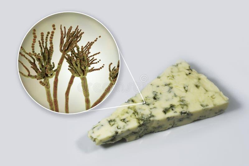 Roquefort ser i grzyba Penicillium roqueforti, u?ywa? w sw?j produkcji ilustracji