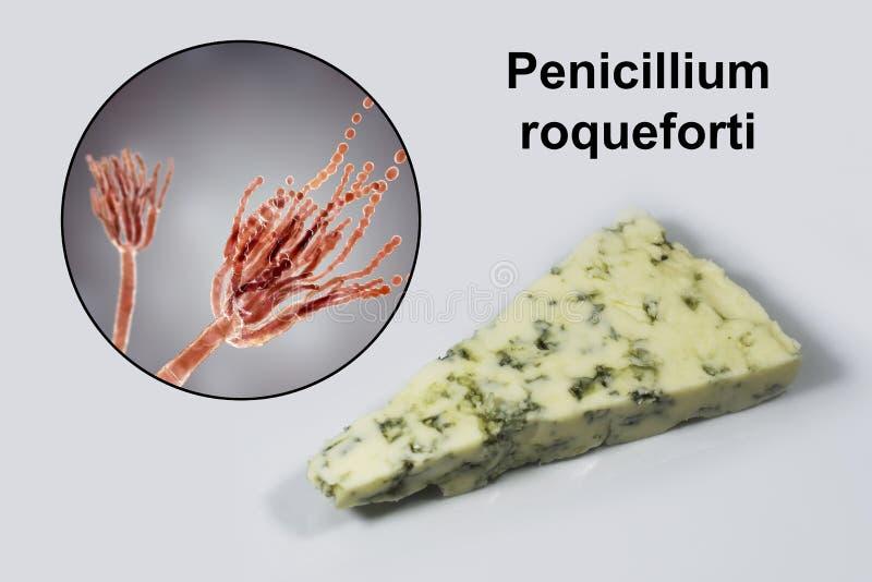 Roquefort ser i grzyba Penicillium roqueforti, u?ywa? w sw?j produkcji ilustracja wektor