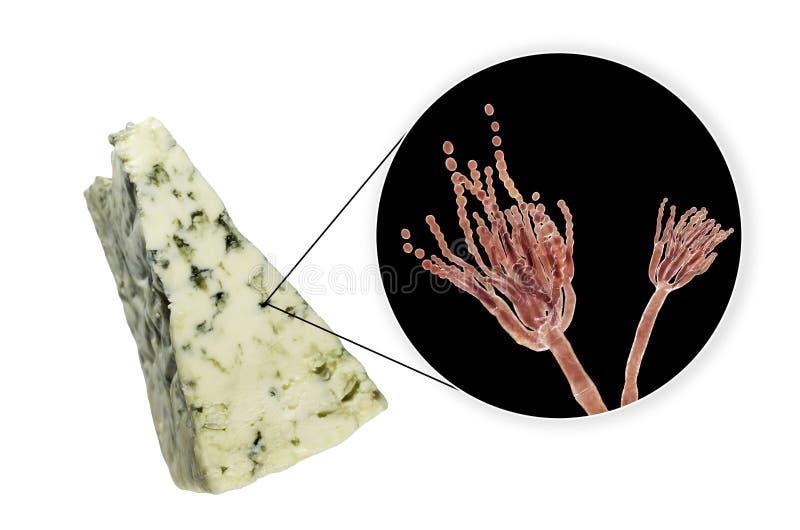Roquefort ser i grzyba Penicillium roqueforti, u?ywa? w sw?j produkcji royalty ilustracja
