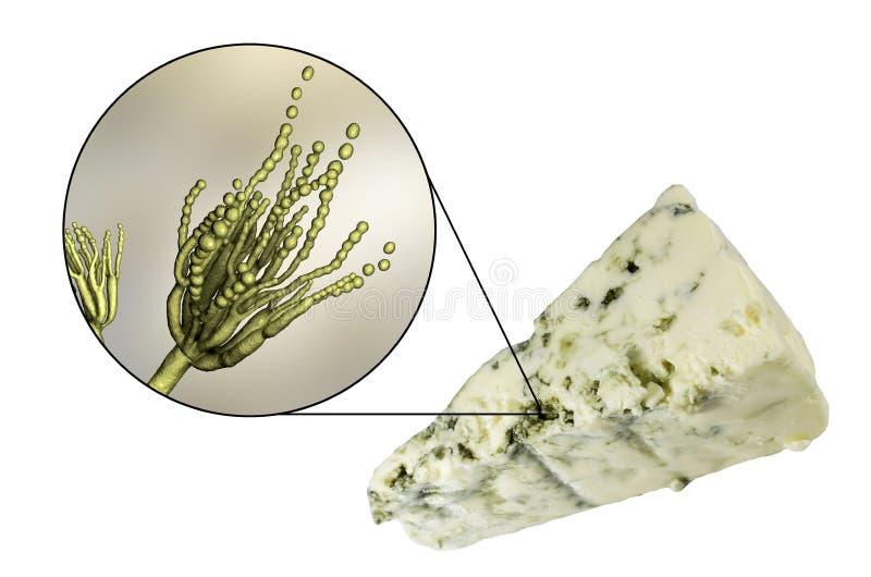 Roquefortkaas en paddestoelenpenicillium roqueforti, die in zijn productie wordt gebruikt stock illustratie