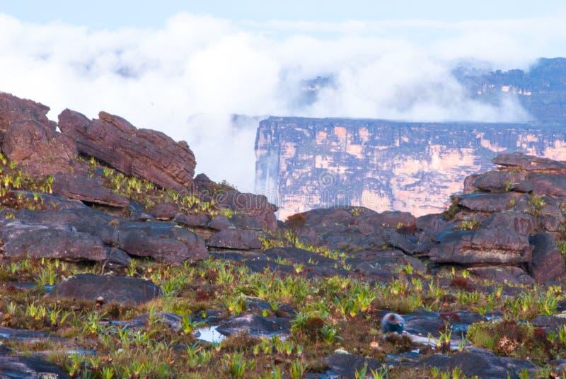 Roraima Tepui Summit, Gran Sabana, Venezuela. Limestones structures on the summit of Roraima Table Mountain, Great Savanna, Canaima National Park, Venezuela royalty free stock photography