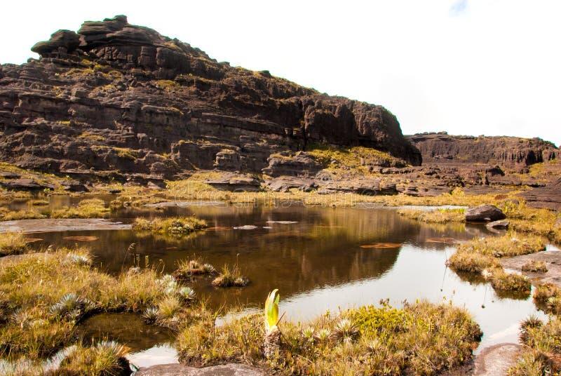 Roraima Tepui toppmöte, Gran Sabana, Venezuela royaltyfria bilder