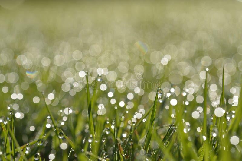 Rosée de début de la matinée sur l'herbe images stock