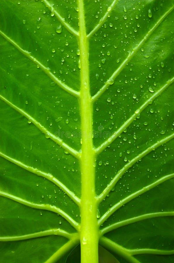Rosée de matin sur le branchement vert photos stock