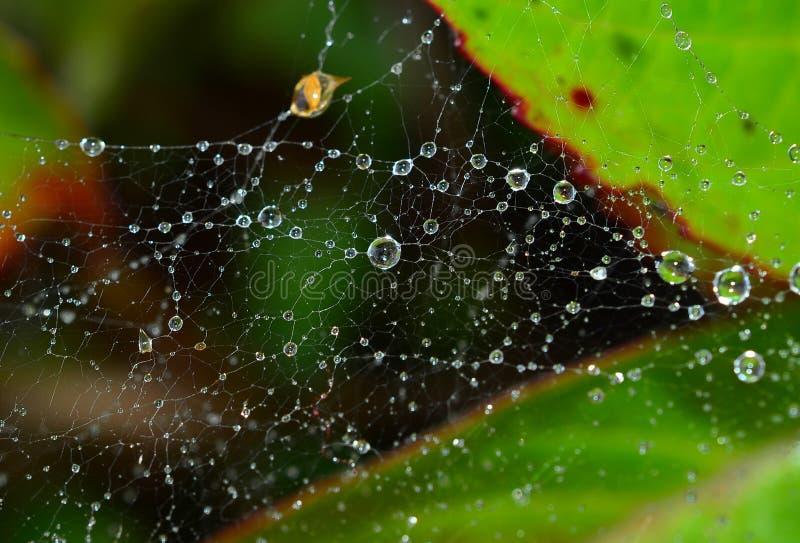 Rosée de matin sur une toile d'araignée photo libre de droits