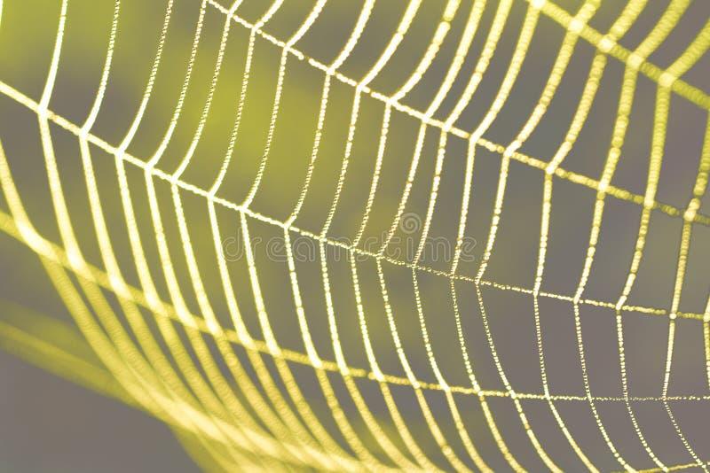 Rosée de matin sur une toile d'araignée photographie stock