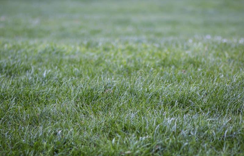 Rosée fraîche sur la belle jeune herbe verte photographie stock