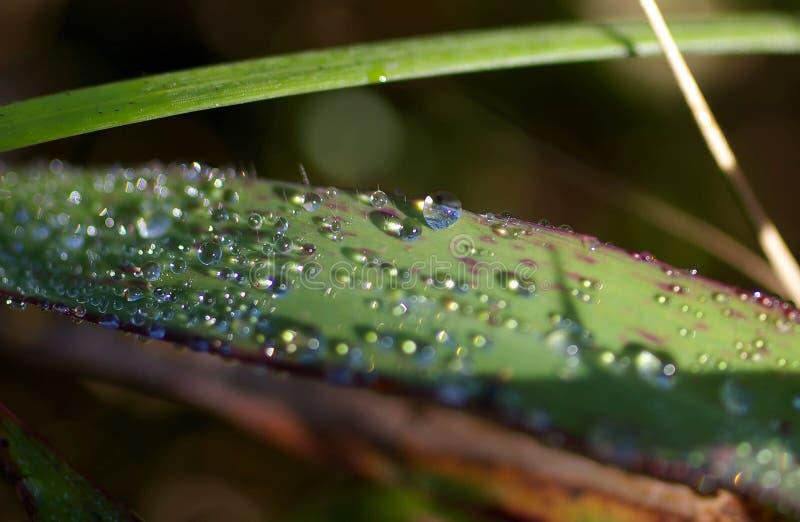 Rosée sur des feuilles de vert dans la forêt photo stock