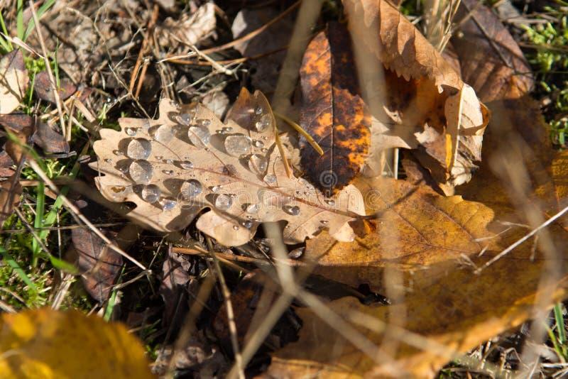 Rosée sur le congé dans la forêt d'automne image stock