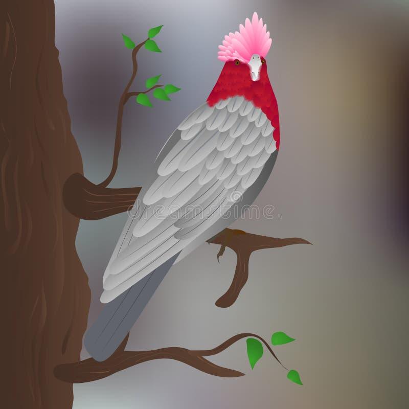 Ros-gången mot kakadua på trädet stock illustrationer