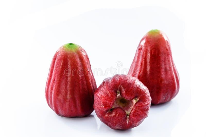 Rosa äpple royaltyfri bild