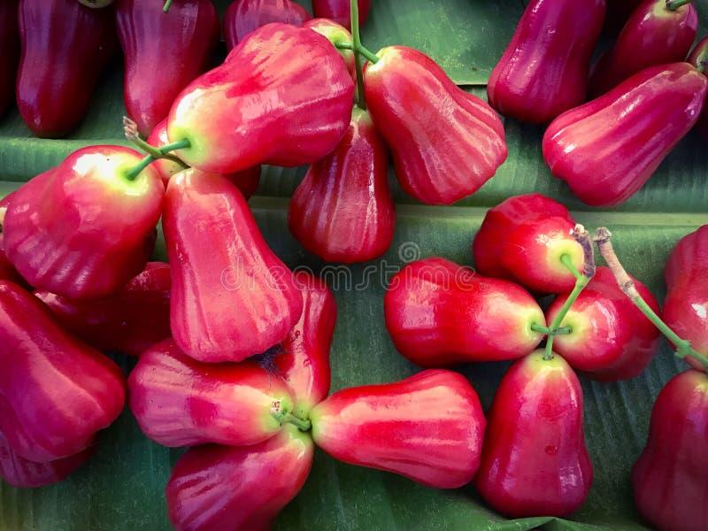 Rosa äpple för röd malajiska, frukt av Syzygiummalaccense arkivfoto