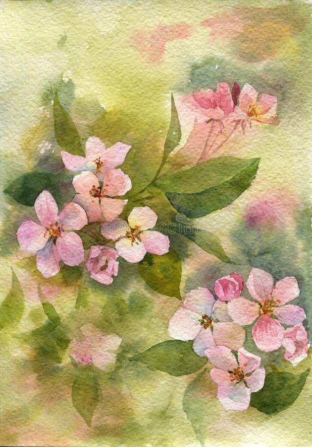 Rosa äppleblomningar för vattenfärg stock illustrationer