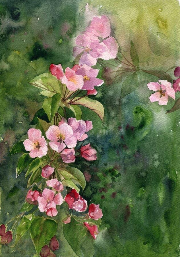Rosa äppleblomningar för vattenfärg royaltyfri illustrationer