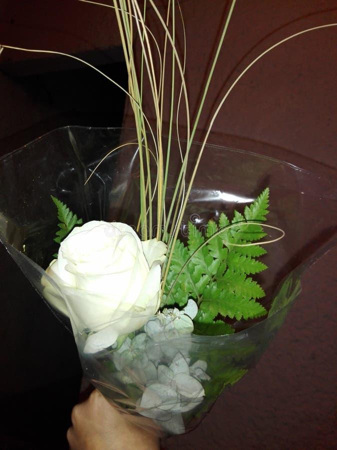 rosa royalty-vrije stock foto