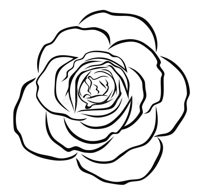 Rosa illustrazione vettoriale