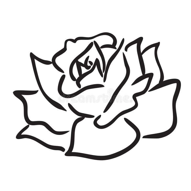 Rosa royalty illustrazione gratis