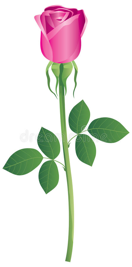 Download Rosa stock vector. Image of green, plant, nature, valentine - 28266109
