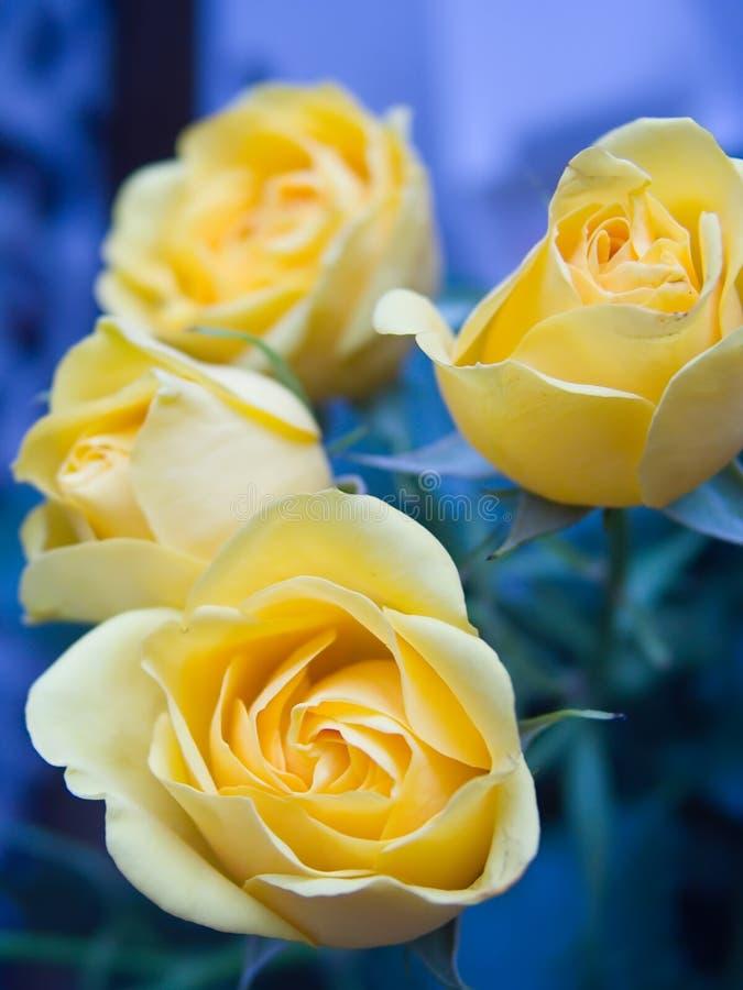 Rosa 3 imagem de stock royalty free