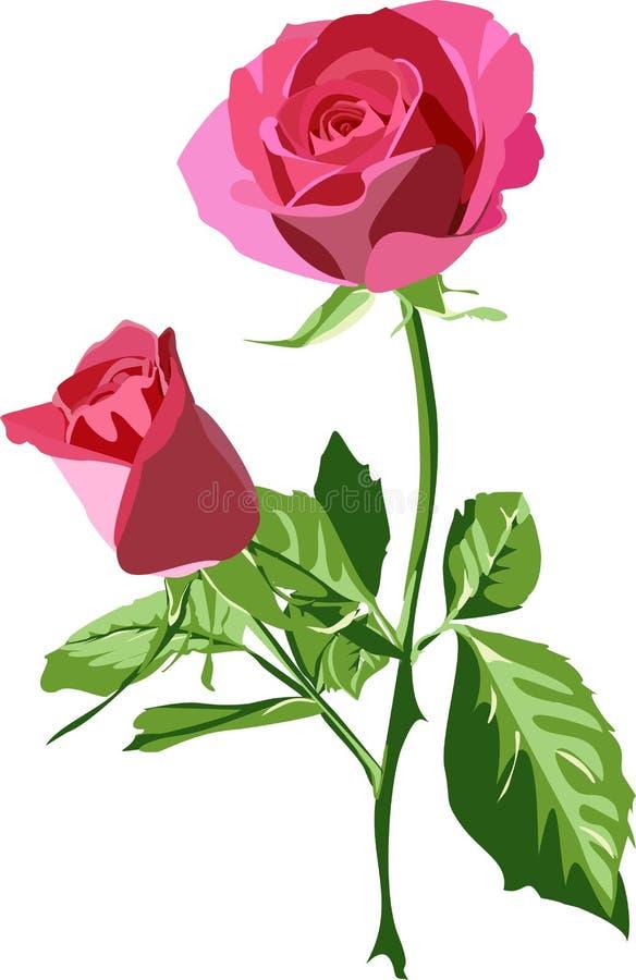Rosa ilustração do vetor