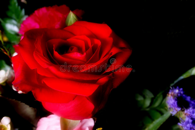 Download Rosa foto de stock. Imagem de romance, preto, nave, se - 533454