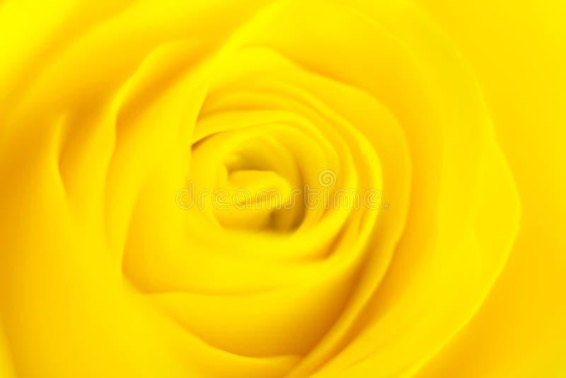 Rosa foto de stock