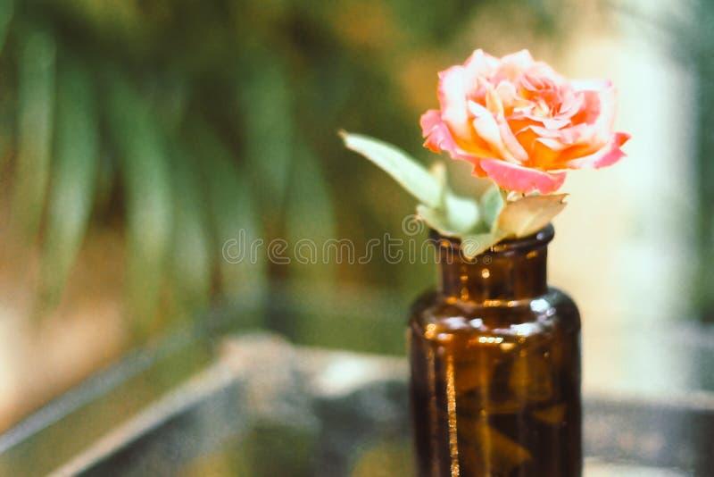 Rosa amarela cor-de-rosa no fundo ambarino pequeno da natureza do verde do borrão do estilo do vintage da garrafa na tabela de ma foto de stock royalty free