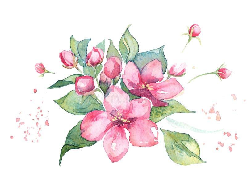 Rosa Aquarellblumen, Apfelbaum oder Kirsche oder Aprikose oder Mandelblumenillustration stockfotos