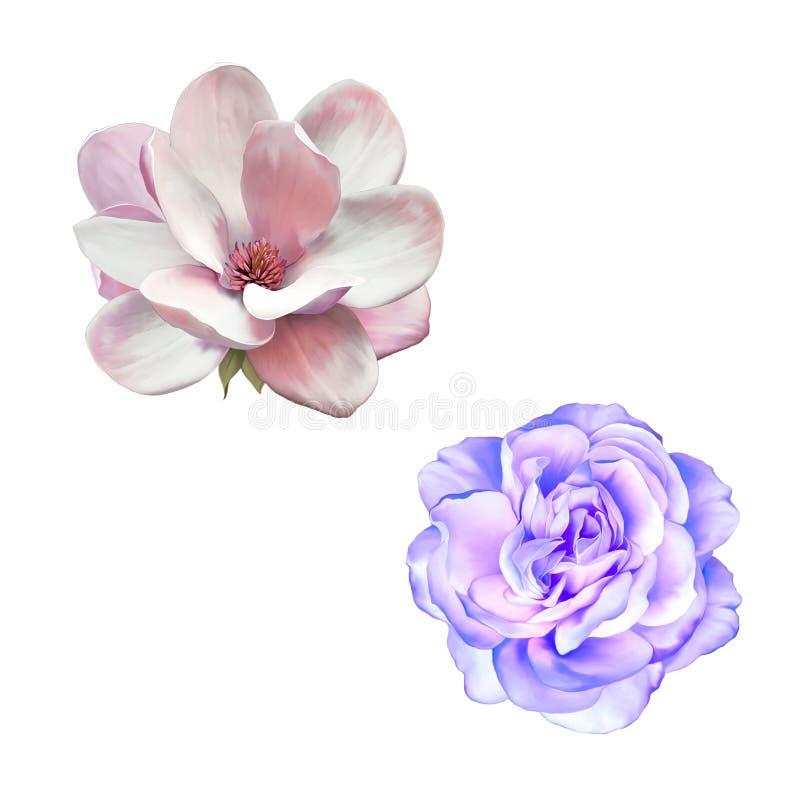 Rosa azul de la púrpura y flor de la magnolia aislada encendido stock de ilustración