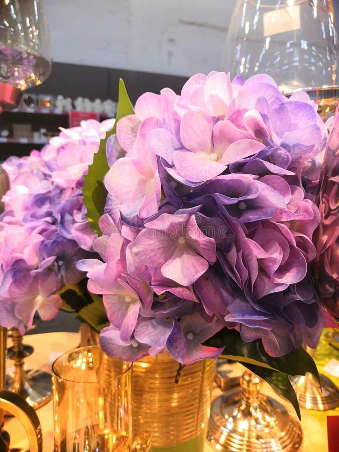 Rosa, azul, lila, violeta, macrophylla p?rpura de la hortensia de la flor de la hortensia que florece en primavera y verano en un foto de archivo libre de regalías