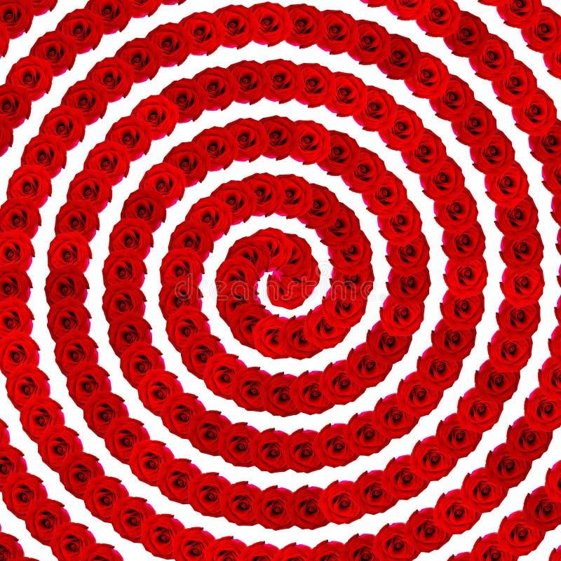 Rosa bakgrund: Sömlös spiral bakgrund för röd naturlig ros arkivbild
