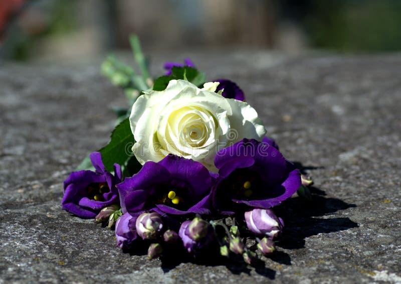 Rosa bianca e gigli porpora del deserto o campana anche chiamata della prateria sulla pietra immagine stock libera da diritti
